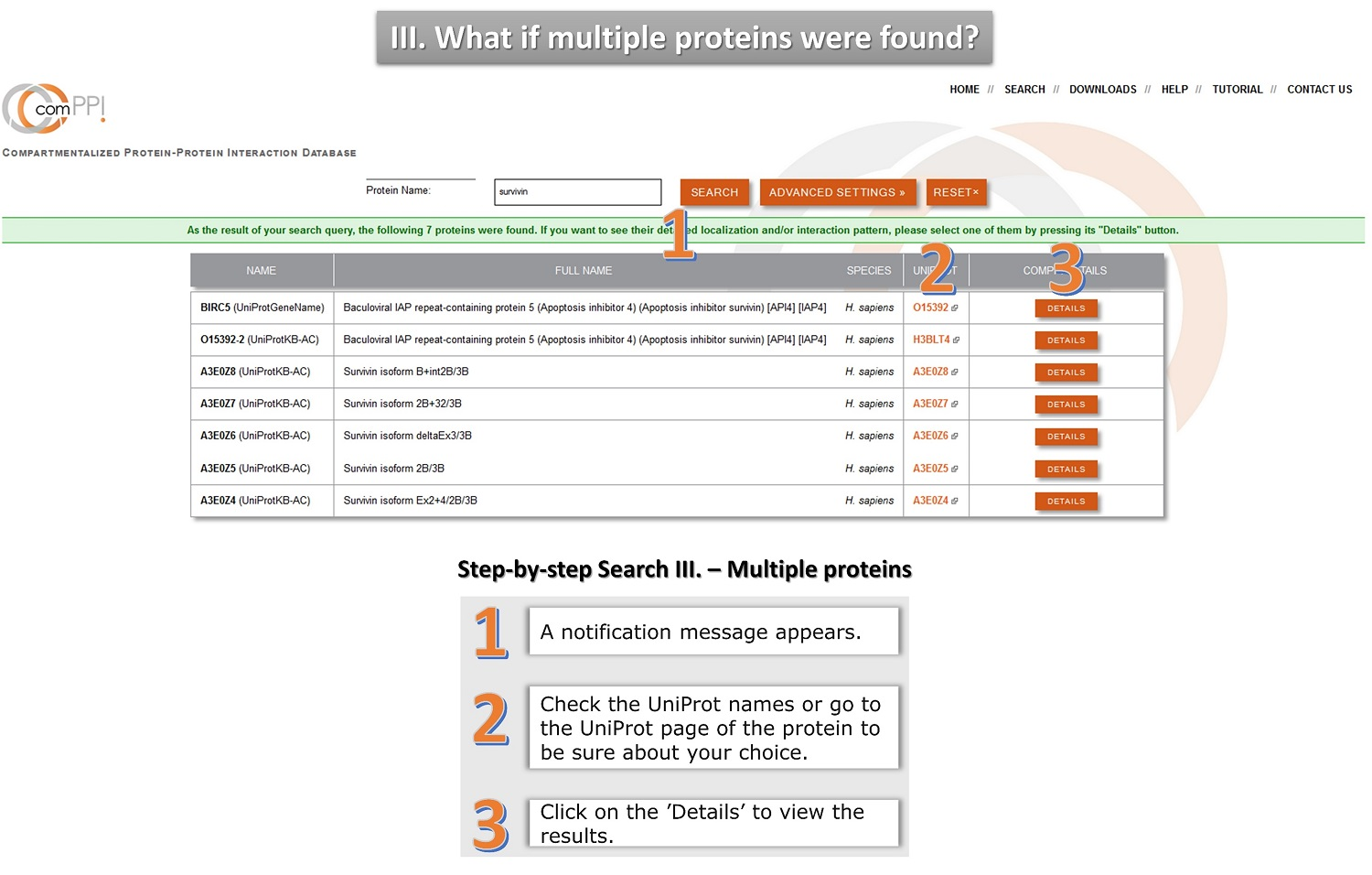 protein search tutorial 3